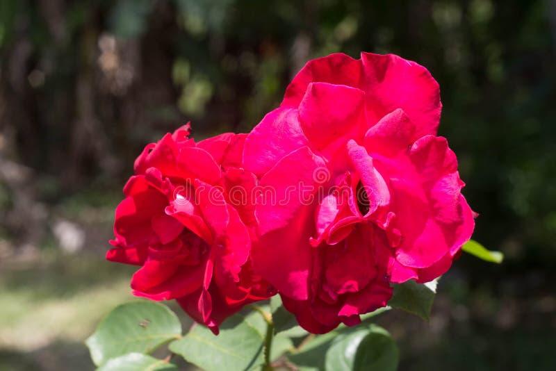 Härlig blomma i skogen royaltyfria foton