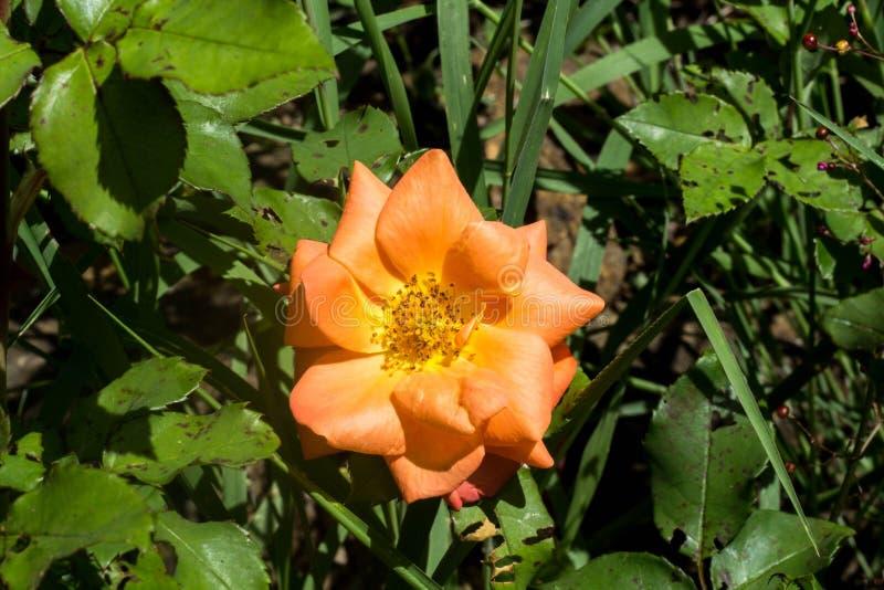 Härlig blomma i skogen arkivbild