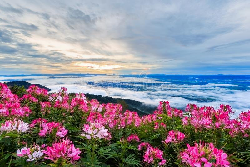Härlig blomma och dimma på sikten av berg arkivbilder