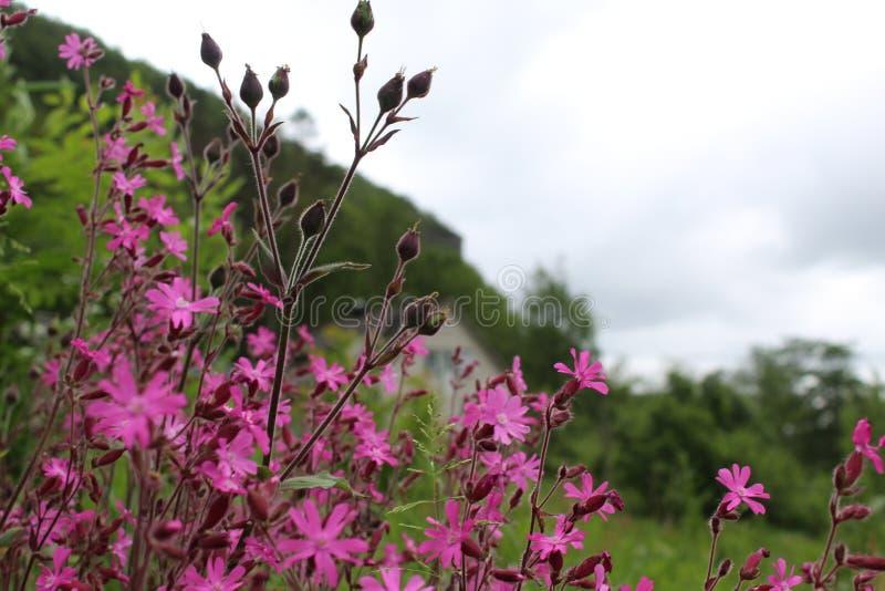 Härlig blomma som är nordisk, presentation royaltyfri bild