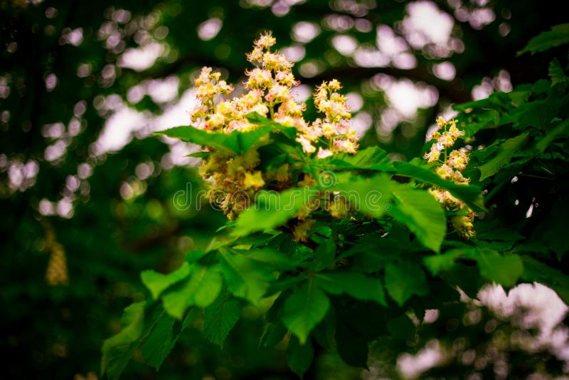 Härlig blomma som fotograferades i prague i vår royaltyfria bilder