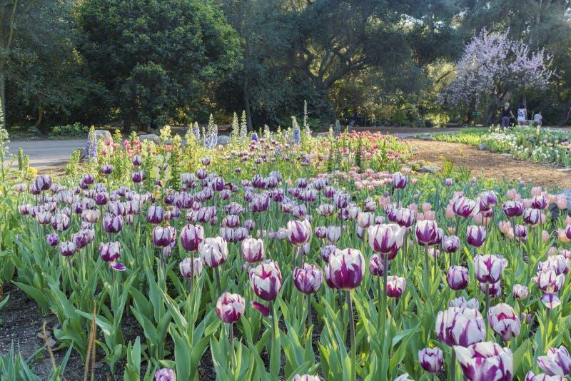 Härlig blommablomning på den Descanso trädgården arkivbild
