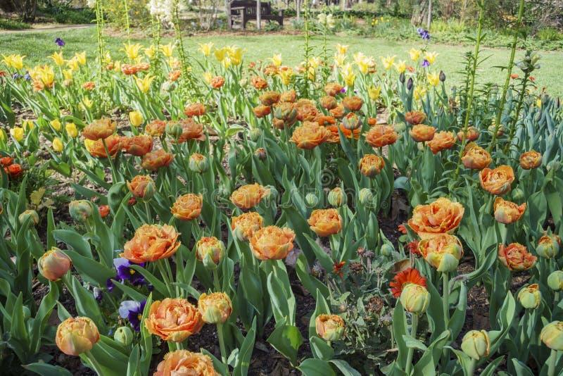 Härlig blommablomning på den Descanso trädgården royaltyfri fotografi