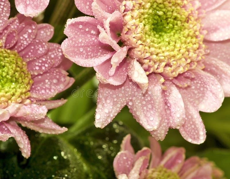 Härlig blommacloseup arkivfoto