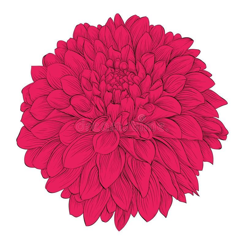 Härlig blommadahlia som isoleras på vit bakgrund för designhälsningkort och inbjudningar av bröllopet födelsedag, Valent stock illustrationer