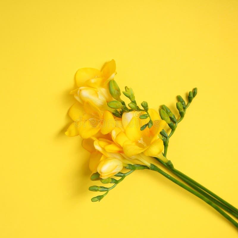 härlig blommafreesia arkivbild