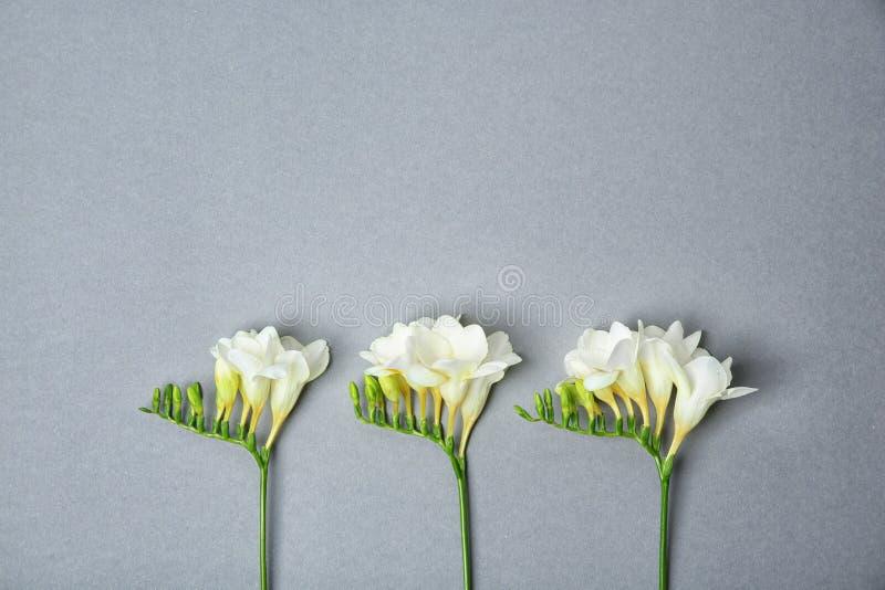 härlig blommafreesia royaltyfri fotografi