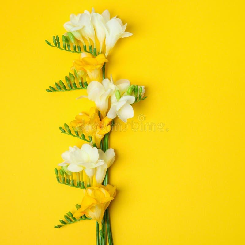 härlig blommafreesia fotografering för bildbyråer