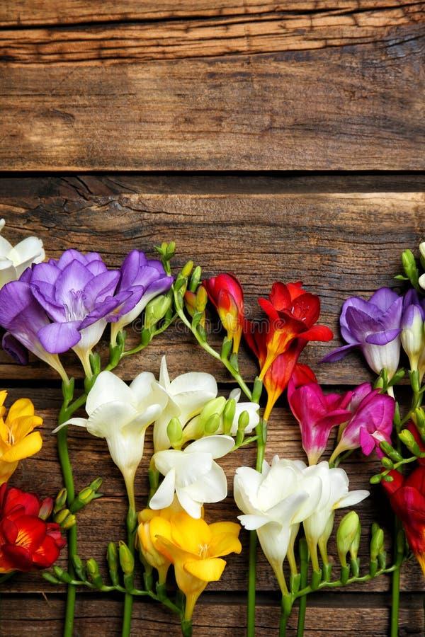 härlig blommafreesia royaltyfria foton