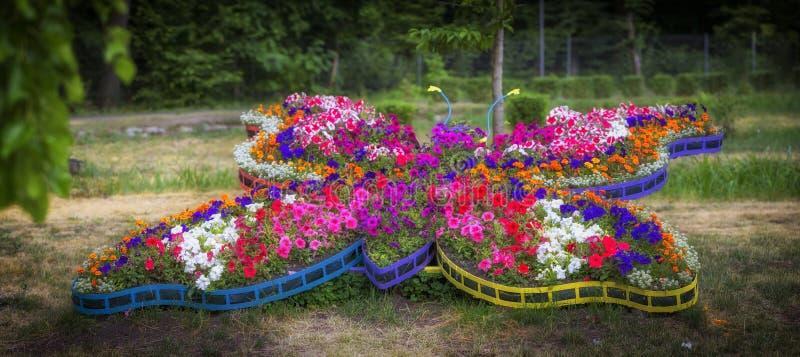 Härlig blommaordning i form av en mångfärgad fjäril som göras av rosa färger, guling, purpurfärgade krysantemum Blommadekor för royaltyfria bilder