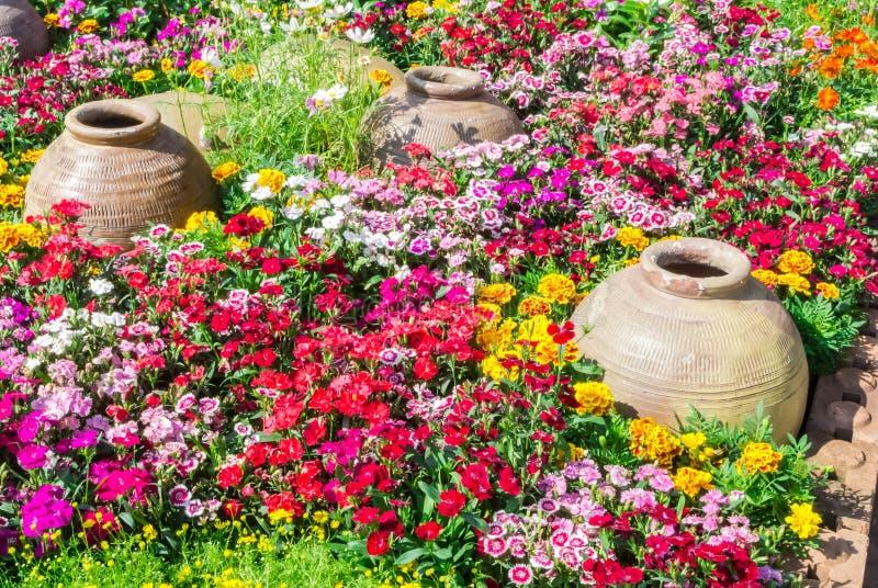 härlig blommaträdgård fotografering för bildbyråer