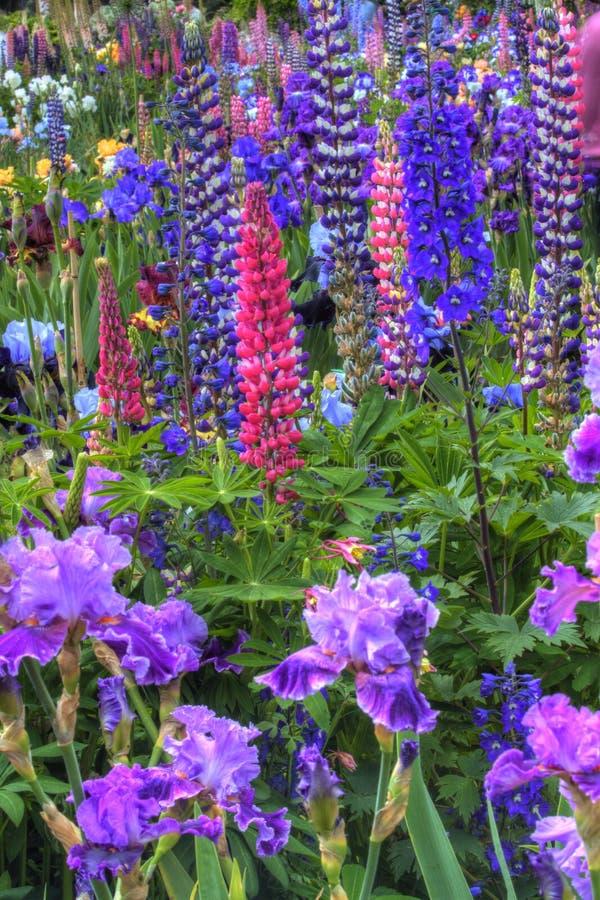 Härlig blommaträdgård nära Salem Oregon fotografering för bildbyråer