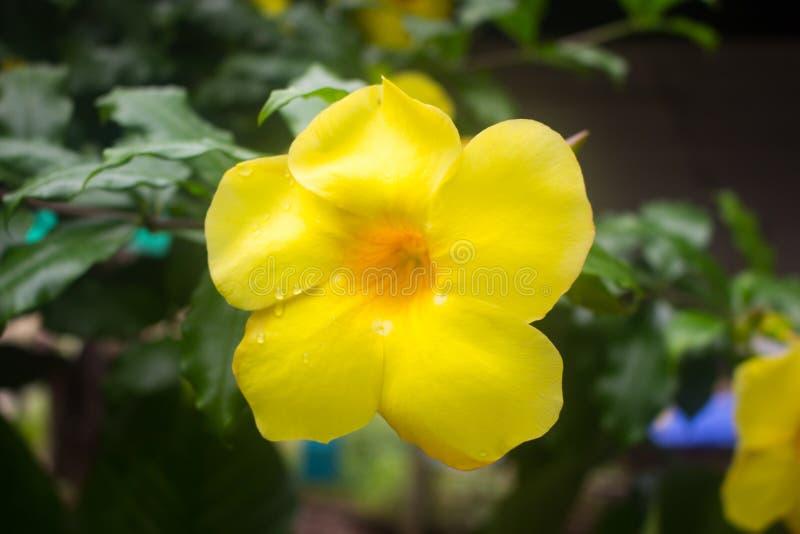 härlig blommayellow royaltyfri fotografi
