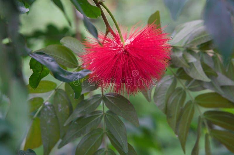 härlig blomning royaltyfri fotografi