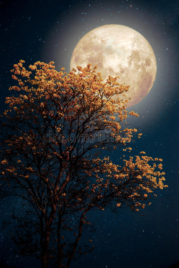 Härlig blomning för trädgulingblomma med stjärnan för mjölkaktig väg i fullmåne för natthimlar arkivfoton