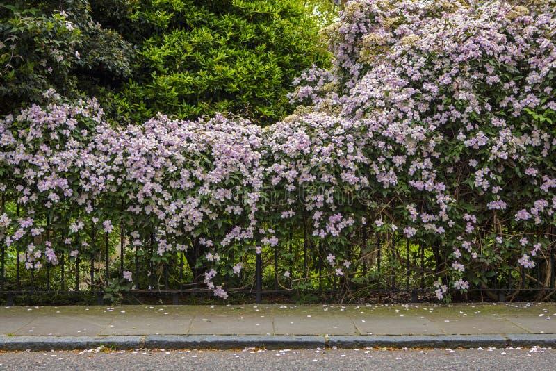 Härlig blomning i London arkivbilder