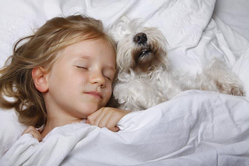Härlig blond liten flicka som sover med den vita schnauzervalphunden på vit säng stående två för pelikan för kamratskap för bakgr royaltyfria bilder
