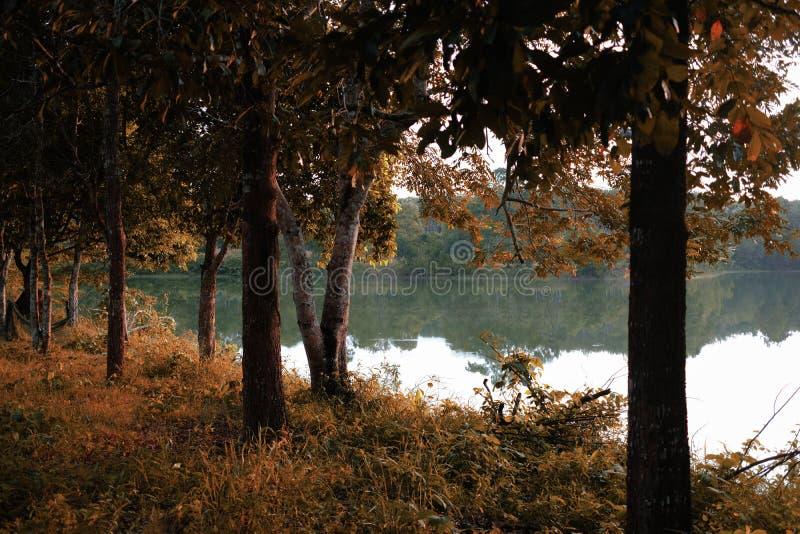 Härlig brae- och trädskugga med trevlig siktsbakgrund royaltyfria foton