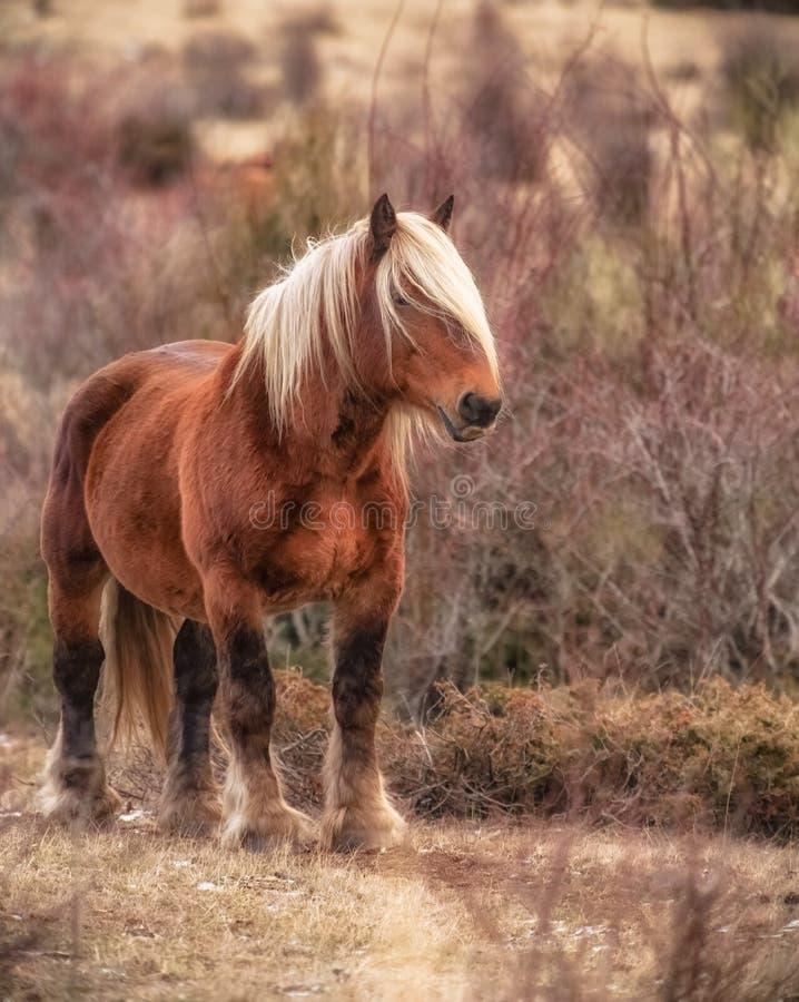 Härlig brun häst i fältet på en nedgångdag arkivfoto