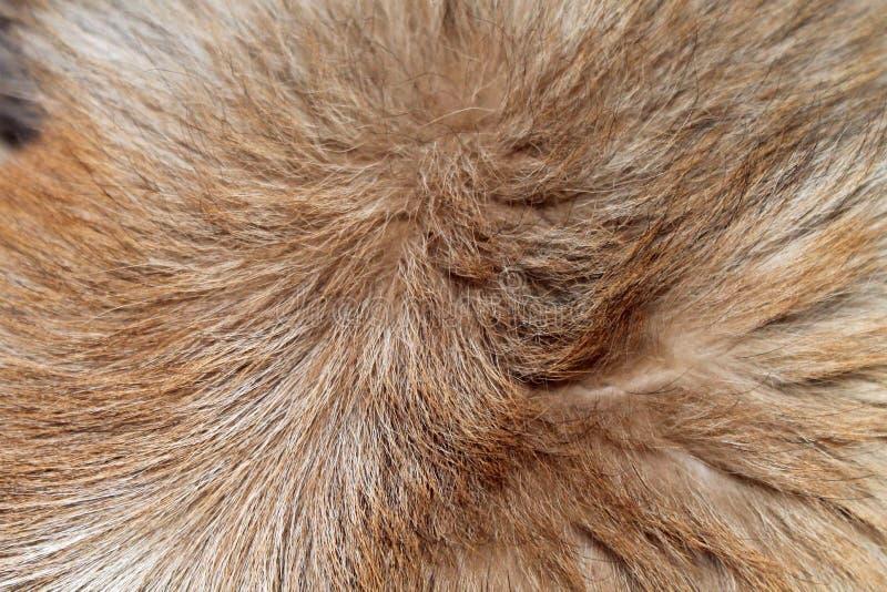 Härlig brun och beige hundpäls arkivbilder
