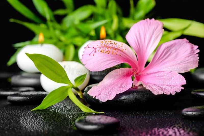 Härlig brunnsortstilleben av den rosa hibiskusblomman, fattar bambu royaltyfri bild