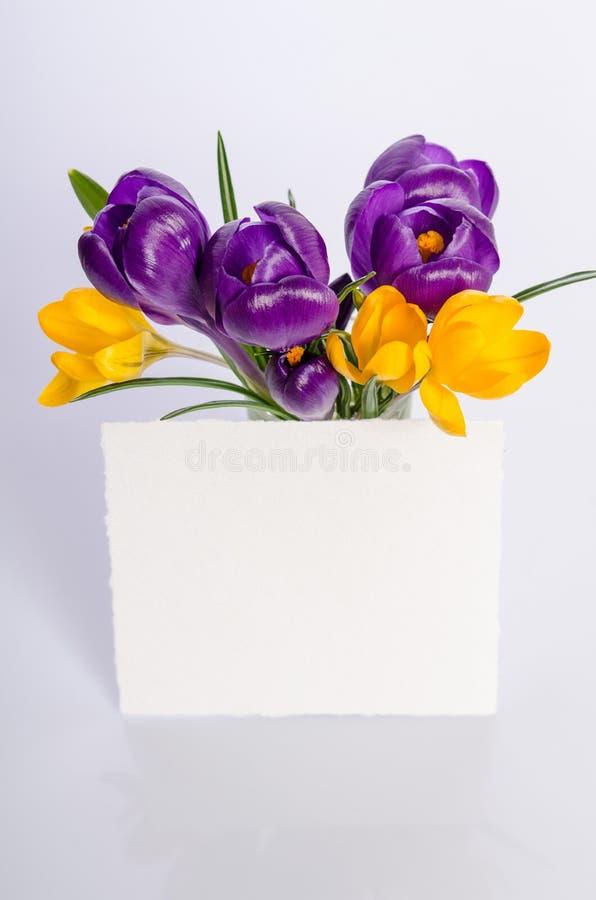 Härlig bukett av gula och purpurfärgade krokusar med papperskortet arkivfoton