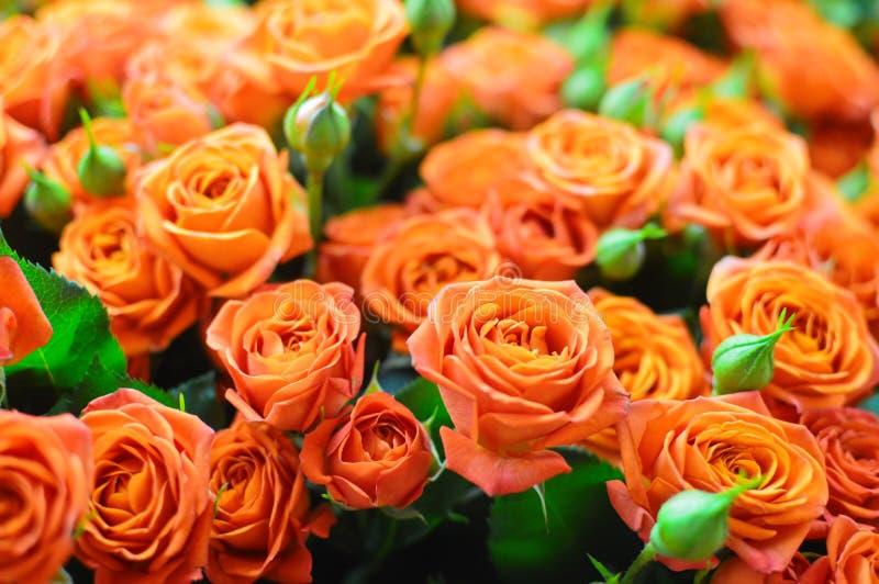 Härlig bukett av orange blommarosor fotografering för bildbyråer