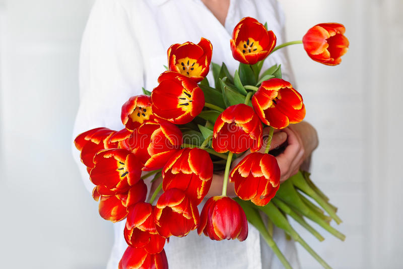 Härlig bukett av röda tulpan i händerna av en flicka royaltyfri bild
