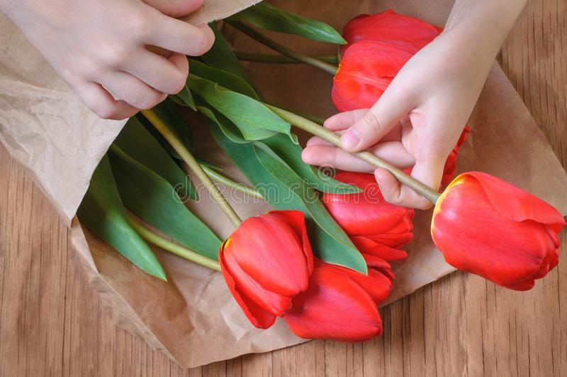 Härlig bukett av röda tulpan i händerna av ett barn i pet fotografering för bildbyråer