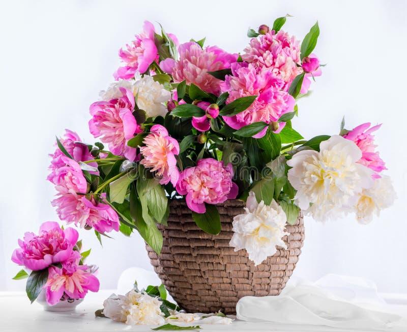 Härlig bukett av rosa och vita pioner royaltyfria bilder