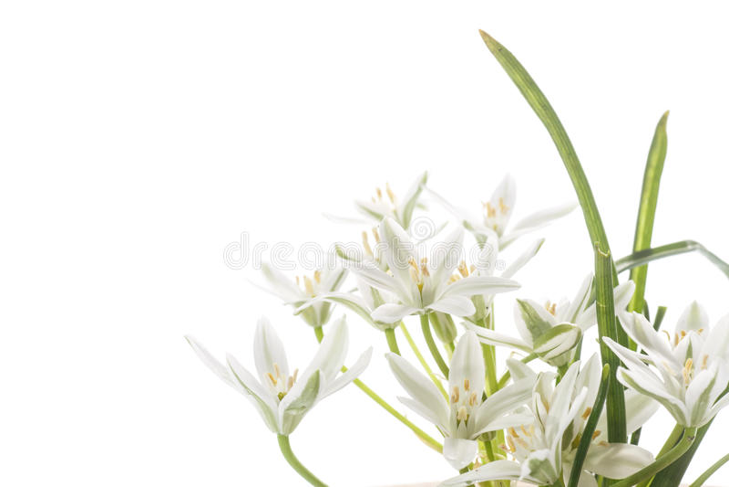 Härlig bukett av vita blommor fotografering för bildbyråer