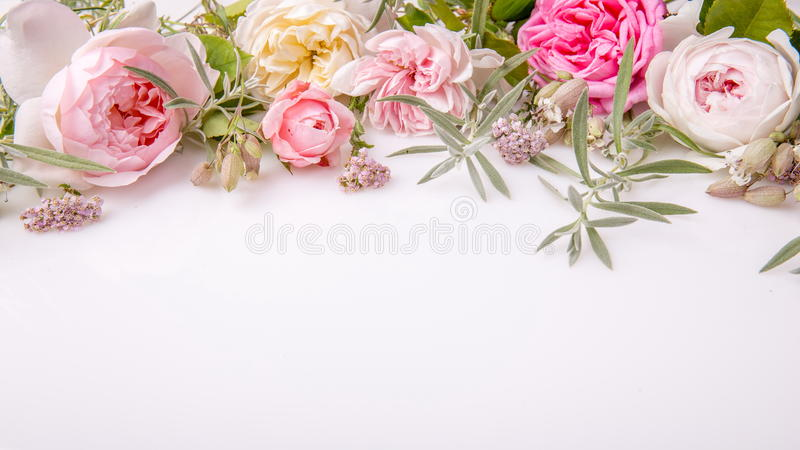 Härlig bukett för engelskarosblomma på vit bakgrund arkivfoto