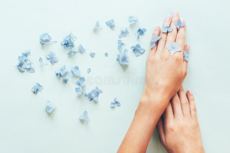 Härlig delikat näck manikyr med små blommor och vanlig hortensiakronblad på en blå bakgrund royaltyfri foto
