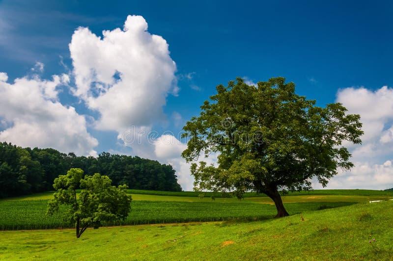Härlig delvis-molnig sommarhimmel över träd och lantgårdfält royaltyfri fotografi