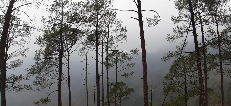 Härlig dimmig morgon i sommar arkivfoton