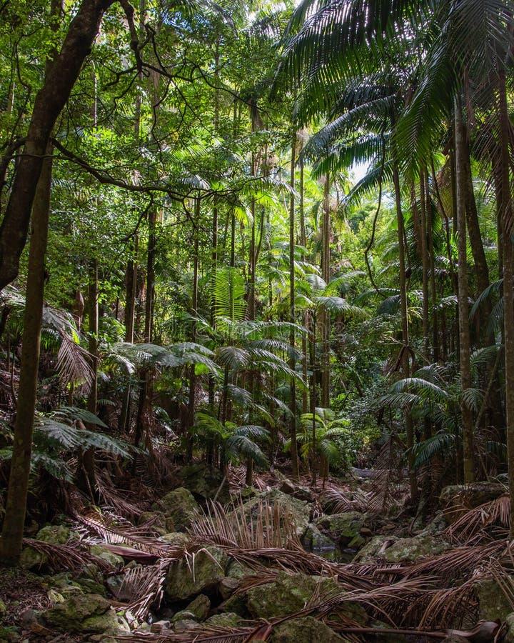 Härlig djungel med palmträd royaltyfri bild