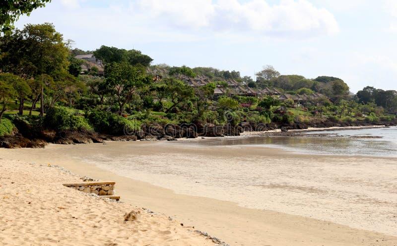 Härlig djungelstrand med det blåa havet på Bali Indonesien med den gula sand- och gräsplanskogen i baksidan royaltyfria bilder