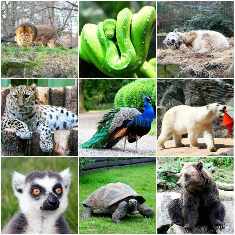 Härlig djurcollage royaltyfri fotografi