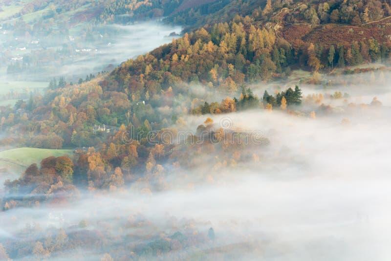 Härlig dröja sig kvar dimma över Autumn Colored Trees royaltyfri bild