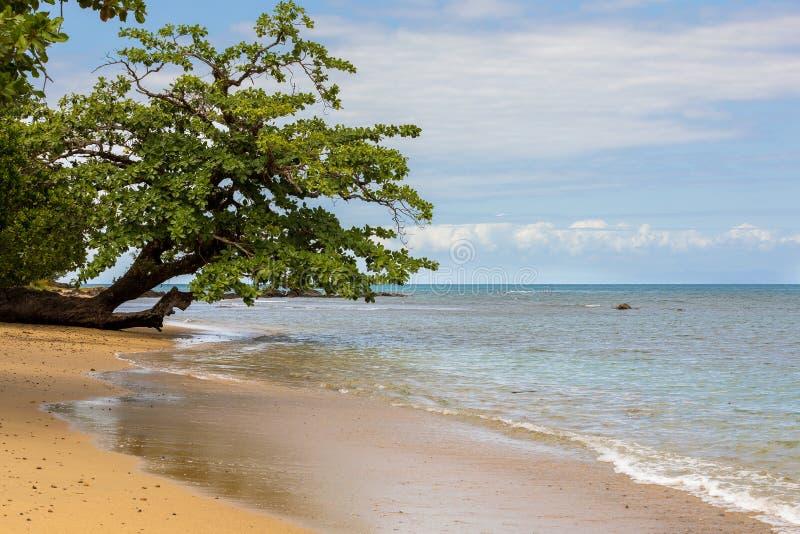 Härlig dröm- paradisnaturstrand Madagaskar royaltyfri bild