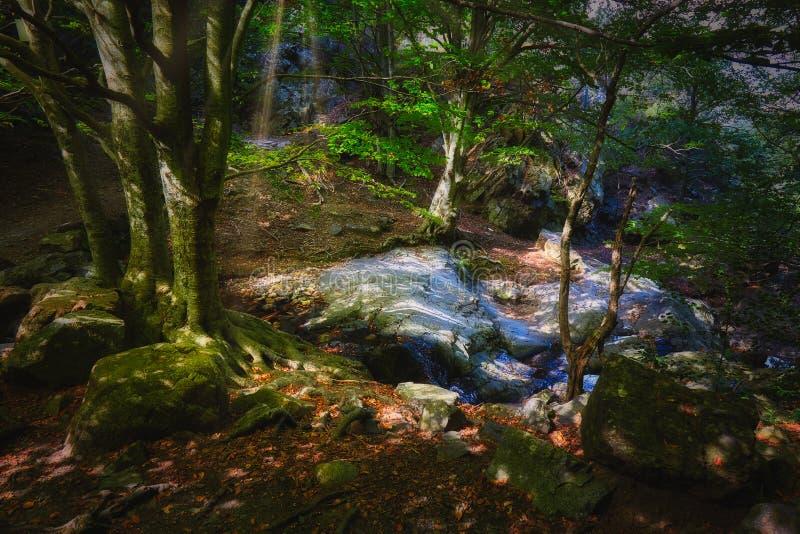 Härlig drömlik bokträdskog i en solig dag royaltyfria bilder