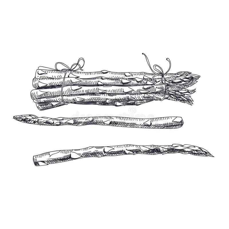 Härlig dragen grönsakillustration för vektor hand stock illustrationer