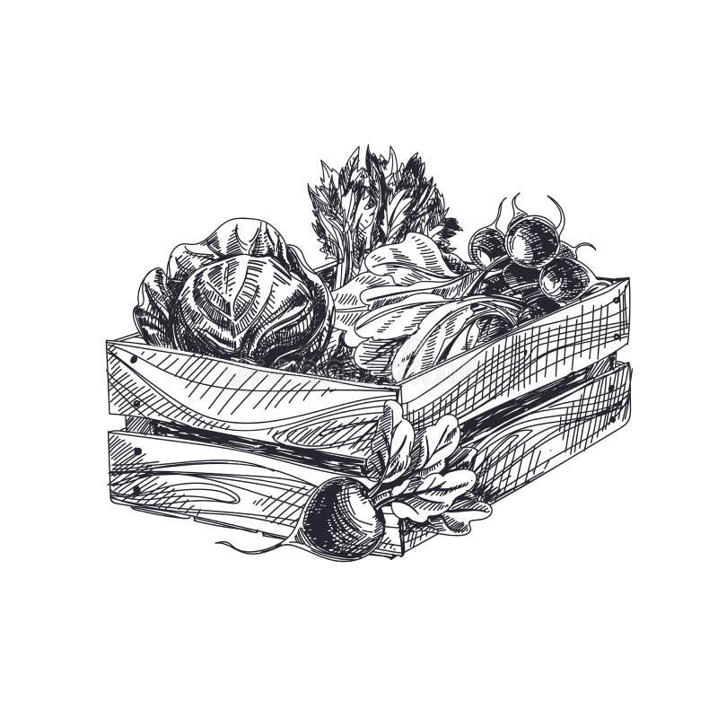Härlig dragen grönsakillustration för vektor hand royaltyfri illustrationer