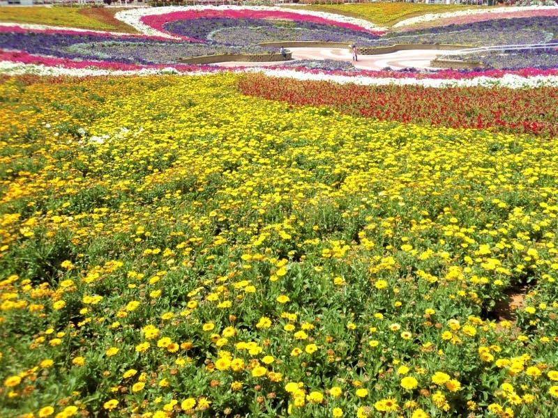 Härlig Dubai trädgård i Uni den Emirat araben fotografering för bildbyråer