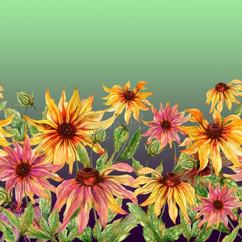 Härlig echinaceablommaconeflower med sidor på grön bakgrund seamless blom- modell för Adobekorrigeringar hög för målning för phot stock illustrationer