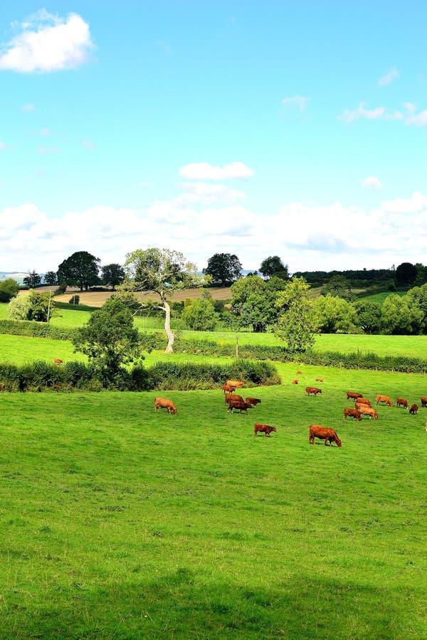 härlig engelsk bygd i sommar nära Ludlow i England royaltyfria bilder