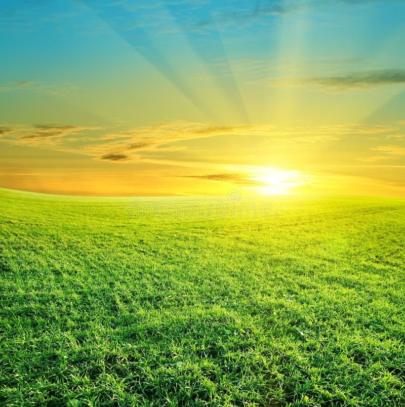 härlig fältgreensolnedgång arkivfoto