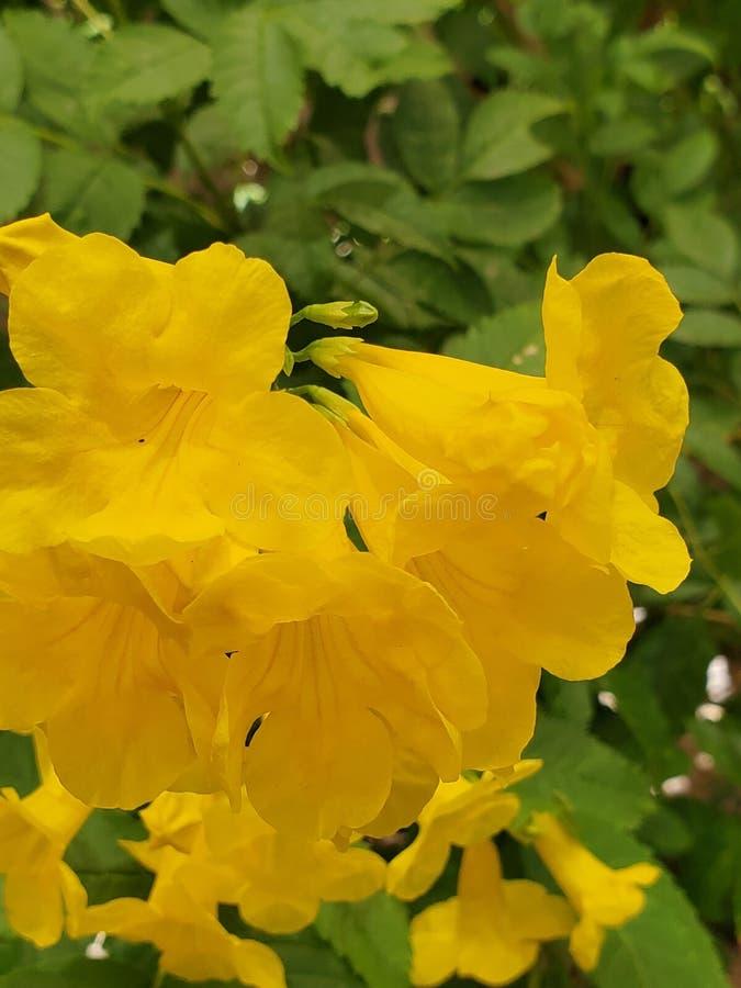 Härlig färg som ska finnas i öken för Arizona sommartid royaltyfria foton
