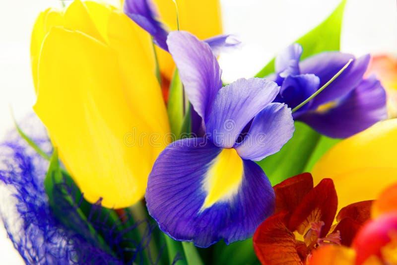 Härlig färgrik bukett av nya vårblommor arkivfoto