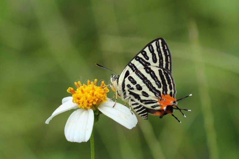 Härlig färgrik fjäril i natur royaltyfri bild